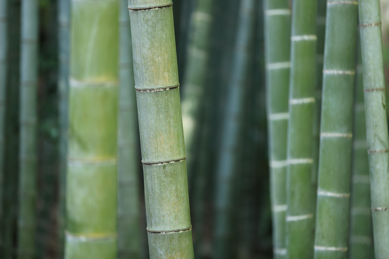 bamboo-919052.jpg